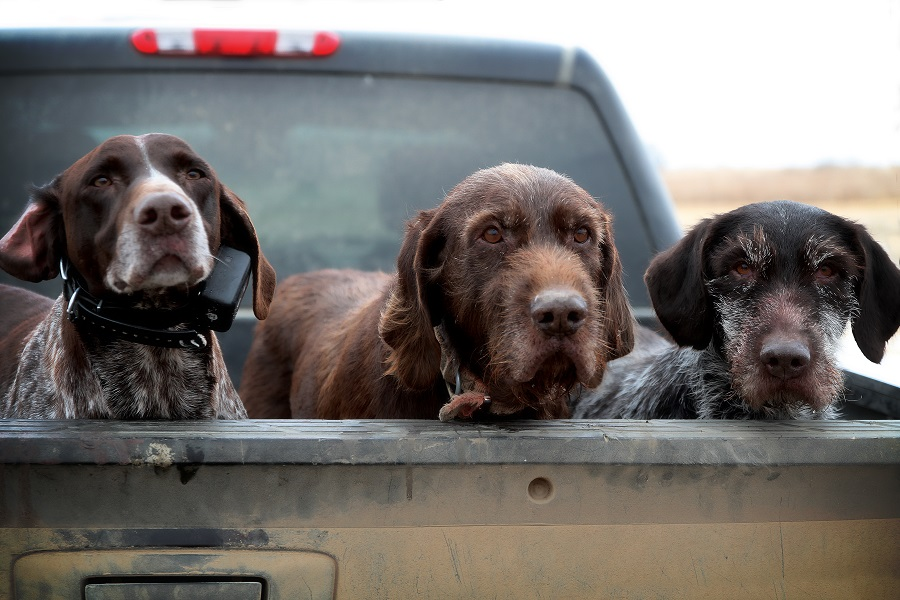 Image of: Real Estate Close To 40 Years Have Been Chasing Bird Dogs It Is Amazing To Mewhen You Factor In Situations Ive Put Dogs Intomore Accidents Dont Happen American Kennel Club Bird Dogs