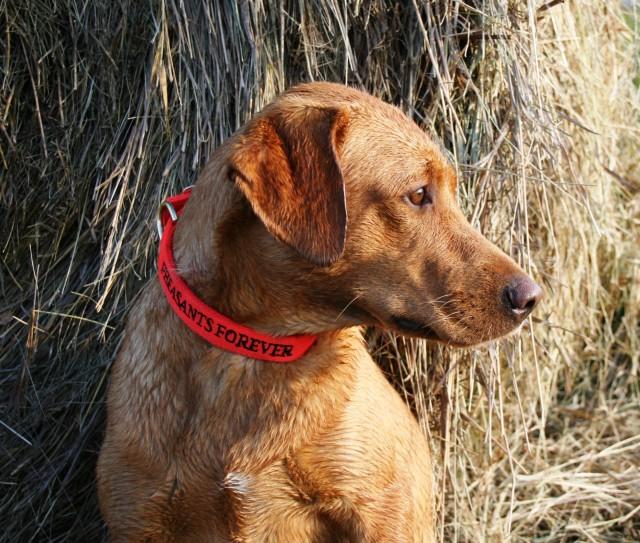 Image Gallery Hunting Dog Names