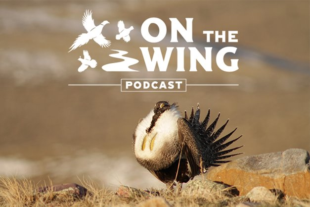 db2c081ae7be8 Podcast Ep. #35: Sage Grouse: Biology, Habitat, and How to Hunt Them
