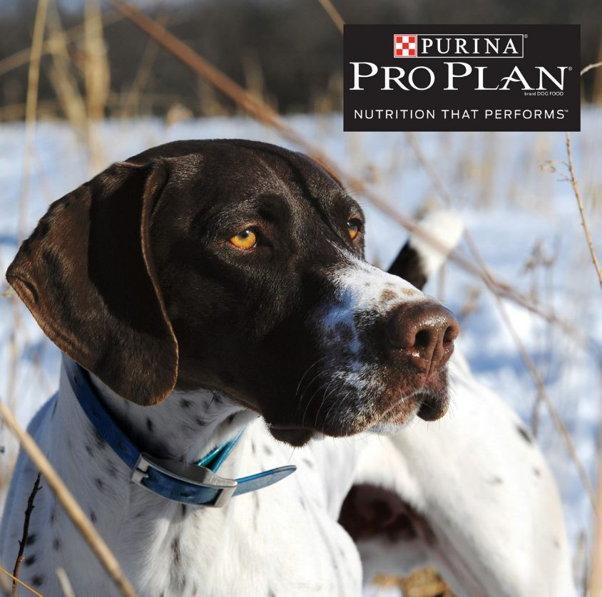 Image of: Ames Plantation Do Know Your Dogs Limit Florida Sportsman Cold Weather Care For Bird Dogs
