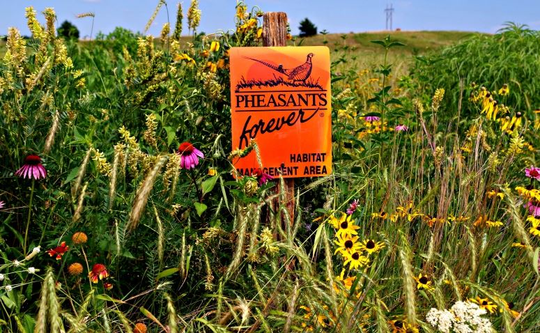 The end result of a pollinator-friendly pheasant habitat project.