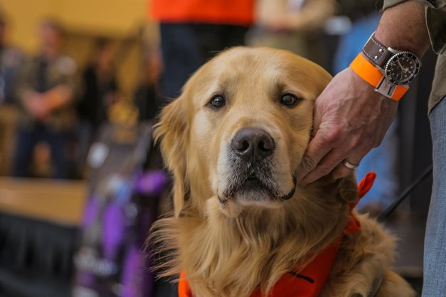 9c6d45dfb8 Wanted  Missing Breeds for 2018 Bird Dog Parade at Pheasant Fest