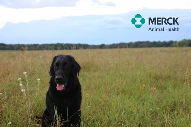 90d254fad Importance of Managing Parasites in the Outdoor Dog