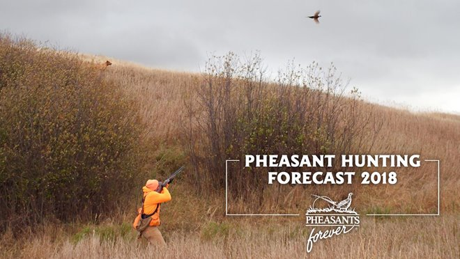 Kansas Pheasant Hunting Forecast 2018