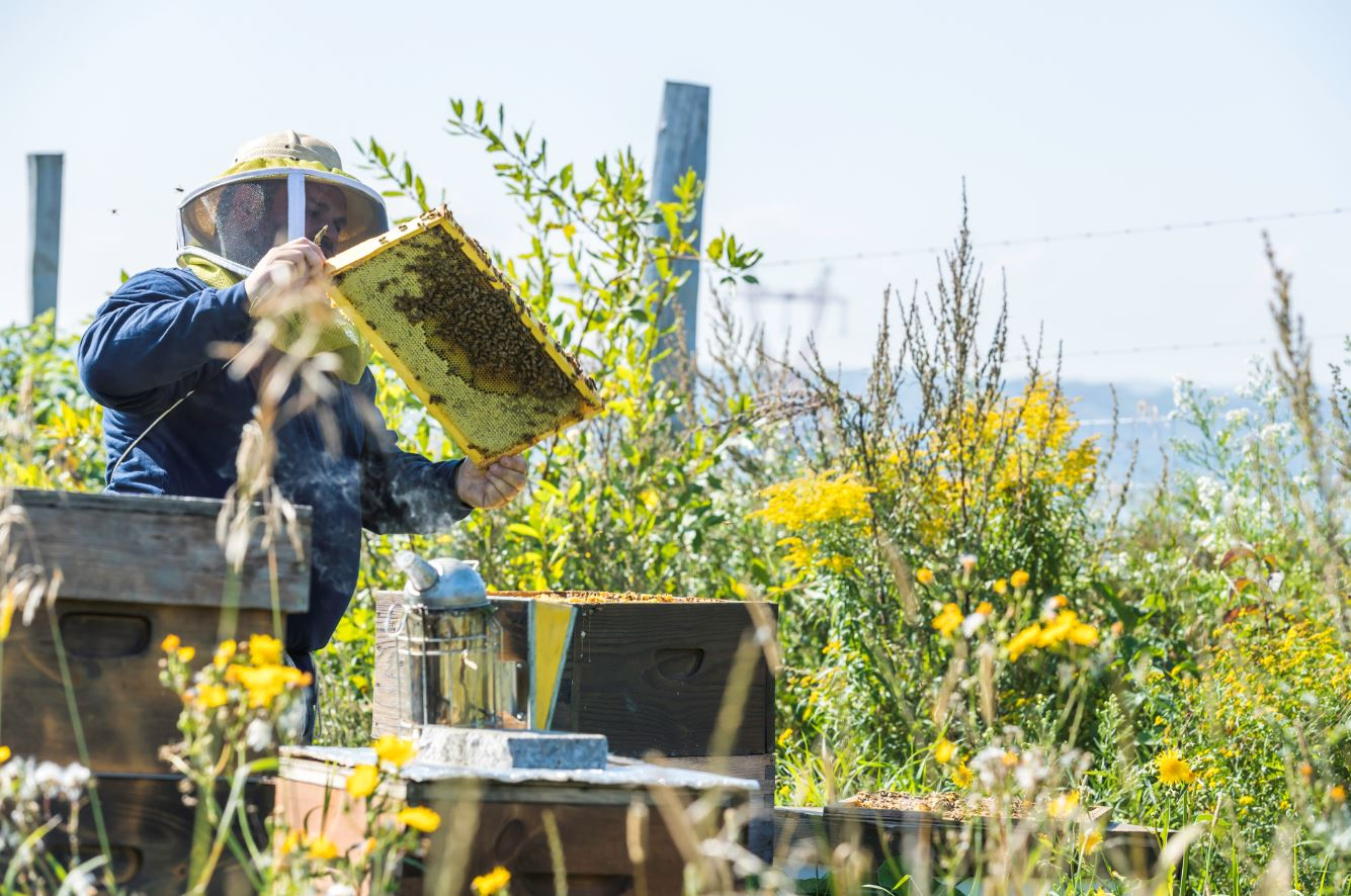 A beekeeper tends his hives, surrounded by wildlflowers.