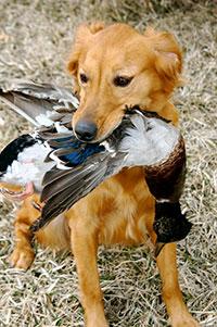Bird Dog Breeds
