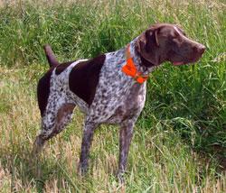 Image of: Estate Investors Hunting Style Pinterest Bird Dog Breeds