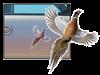 Pheasant Auto & Gun Safe Magnet